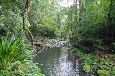 Canungra Creek | Box Forest Circuit | Lamington National Park